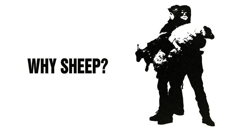 The KLF Why Sheep?